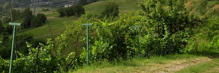 Monte Bibele Agriturismo